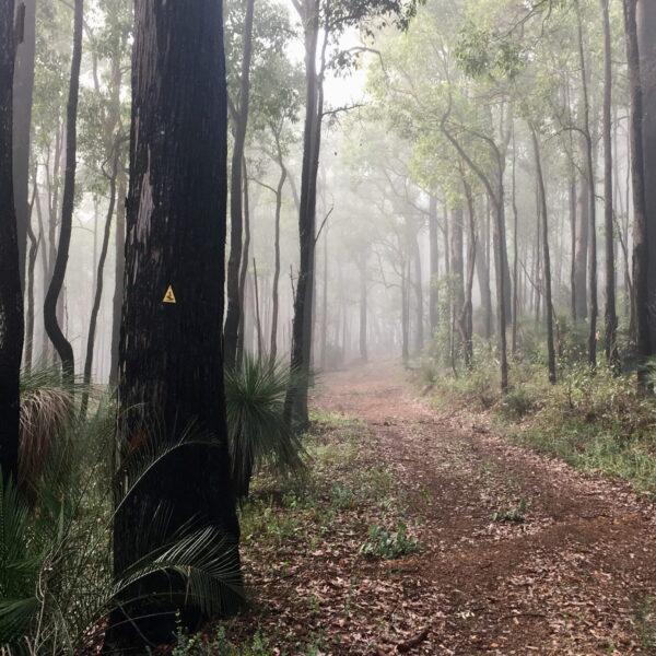 Beautiful forest of the Bibbulmun Track